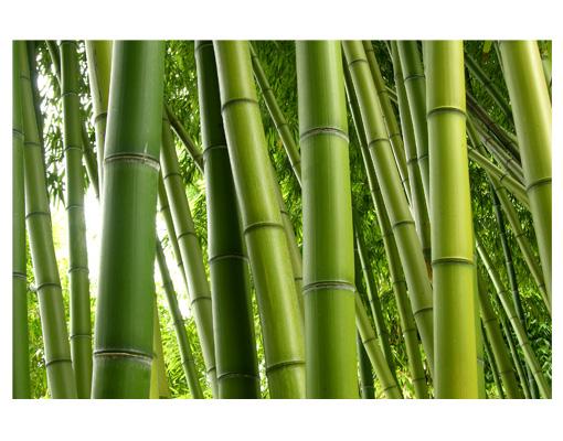 Samolepící tapeta  Bambus 2  DESIGNBATERIE